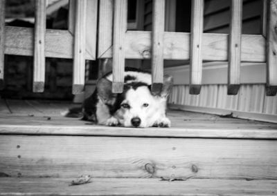 black and white photo of dog laying on deck