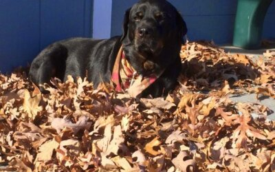 Sweet Sasha Bear Has Passed Away